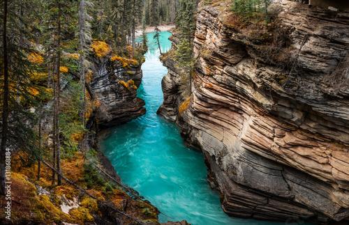 Poster Rivière de la forêt Athabasca Falls. Canada