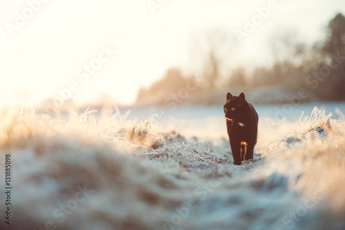 Photo Stands Panther Schwarze Katze im Winter