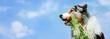 Hund im Seitenprofil mit einer Karotte im Maul vor blauem Himmel mit weißen Wölkchen