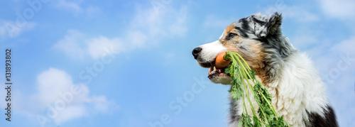 Poster Hond Hund im Seitenprofil mit einer Karotte im Maul vor blauem Himmel mit weißen Wölkchen