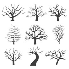 Dead Tree Silhouettes. Dying B...