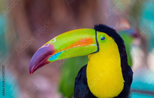 In de dag Toekan The keel-billed toucan, also known as sulfur-breasted or rainbow-billed toucan, is a colorful Latin American member of the bird family. It is one of the most colorful birds in the world.