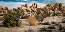 """Desert Art"" The Mojave And Co..."