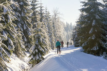 Cross-country Skiers Running A Groomed Ski Trail. Road In Mountains At Winter In Sunny Day. Trees Covered With Hoarfrost Illuminated By The Sun. Jizera Mountains, Czech Republic.