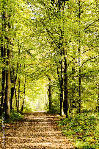 Spoed Foto op Canvas Weg in bos A pathway covered by leaves in a dense forest with filtered rays