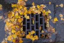 Leaf Clogged Drain