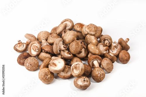 Valokuva  Group of Shiitake mushrooms