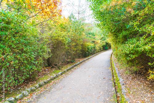 Foto auf Leinwand Garten Walk Way with Red maple leaves blooming at Arashiyama