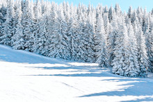 Aerial View Panorama Of The Slope At Ski Resort, Snowy Pine Trees