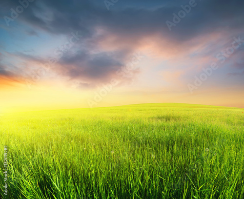 Fotobehang Zwavel geel Grass on the field during sunrise. Agricultural landscape in the summer time..