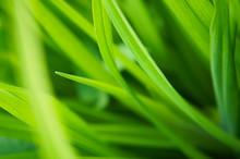 Green Grass Soft Focus