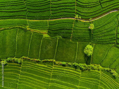 Garden Poster Rice fields Aerial panorama of the green rice fields. Bali, Indonesia