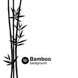 Fototapeta Bedroom - Bamboo background. Vector