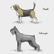 Dog Breed Engraved, Hand Drawn...