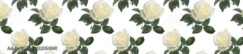 panorama pattern fresh white roses
