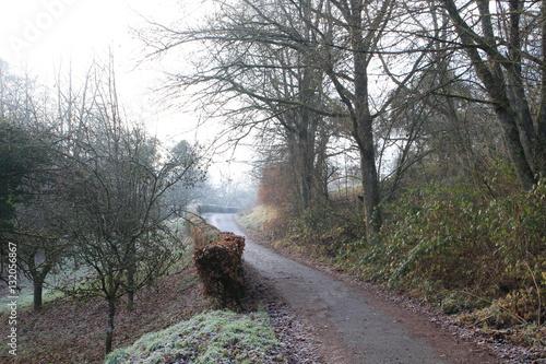 Weg im Wald mit Bäumen im Nebel Canvas-taulu