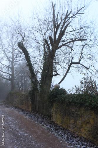 Valokuva  Weg vorbei an einer urigen Mauer mit Bäumen im Winter