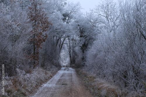 Valokuva  Weg im Wald mit Gefrorenen Bäumen im Winter
