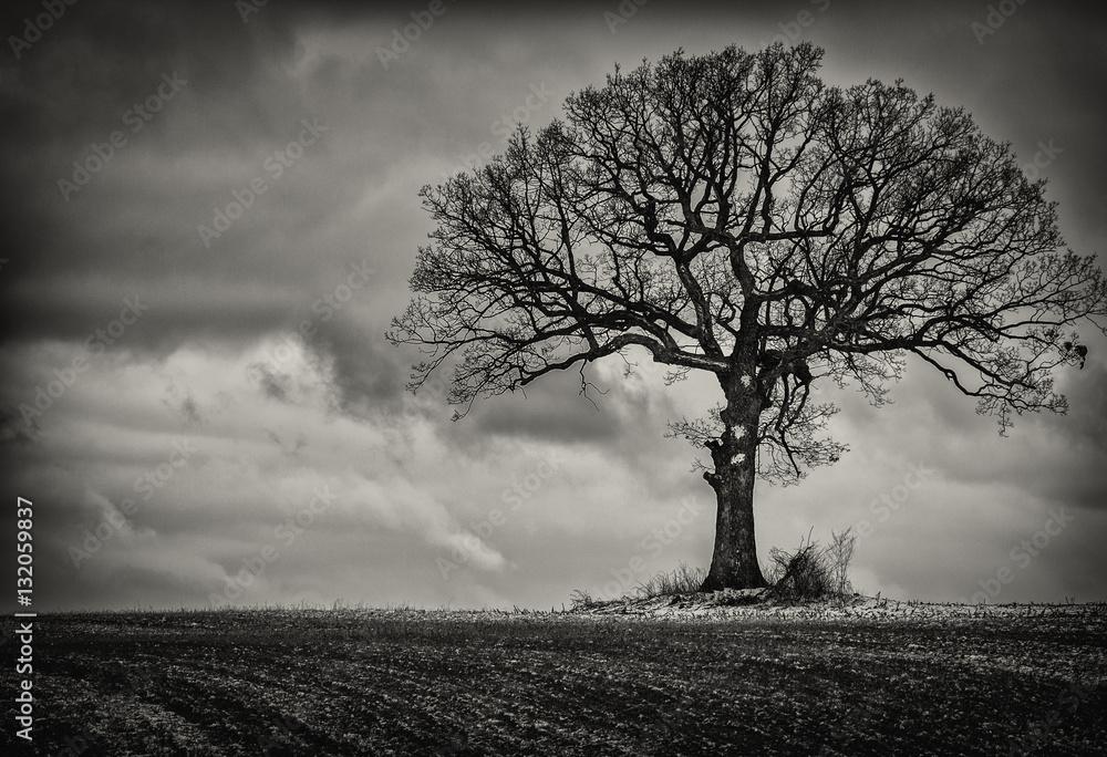 Fototapeta Single Tree in Black and White