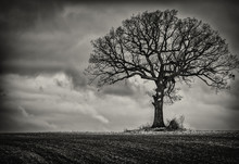 Single Tree In Black And White