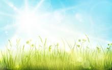 Green Grass, Blue Sky, Spring ...