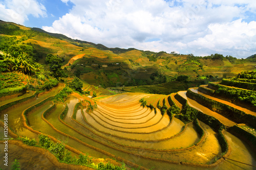 Fotobehang Rijstvelden Terraced rice field in Vietnam