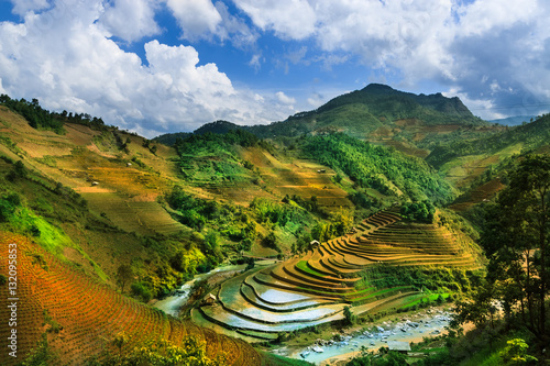 Garden Poster Rice fields Terraced rice field in Vietnam