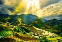Rice Fields On Terraced Of Mu Cang Chai, YenBai, Vietnam. Vietnam Landscapes.