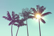 canvas print picture - Tropical palm tree silhouette against bright sunlight
