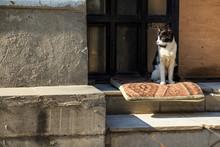 Stray Skinny Cat On Street