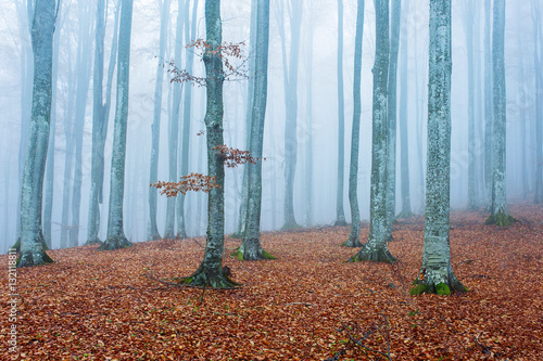 Fotografie, Tablou  foggy forest in autumn to winter