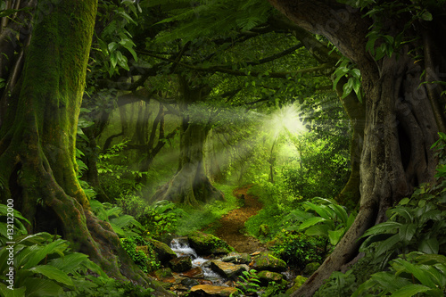 Printed kitchen splashbacks Road in forest Deep tropical jungles of Southeast Asia in august
