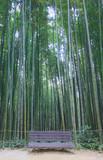 Dense bamboo forest in Damyang-gun, Korea (Juknokwon)