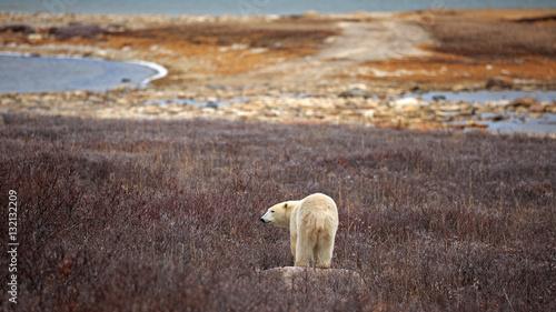 Foto op Aluminium Ijsbeer Eisbär