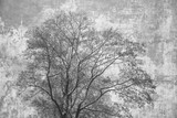 Silhouette crown of the tree on abstract grey background. Double exposure of wood and rough concrete surface - 132141447