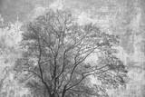 Sylwetki korona drzewo na abstrakcjonistycznym szarym tle. Podwójna ekspozycja drewna i szorstkiej powierzchni betonu - 132141447