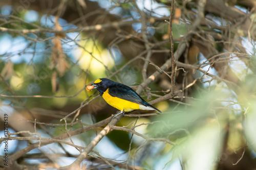 Staande foto Vogel El pájaro está comiendo fruta.