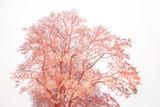 Kreatywne drzewo na białym tle. Fantastyczna korona drzewa, podwójna ekspozycja - 132143205