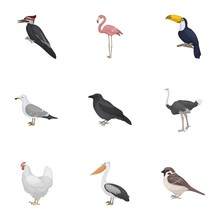 Bird Set Icons In Cartoon Style. Big Collection Of Bird Vector Symbol Stock Illustration