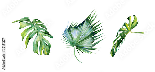 Foto  Watercolor illustration of tropical leaves, dense jungle