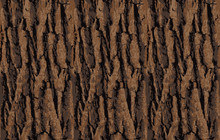 Seamless Tree Bark Texture. Endless Wooden Background For Web Page Fill Or Graphic Design. Oak Or Maple Vector Pattern