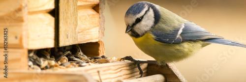 Fotomural  Blaumeise am Vogelhaus