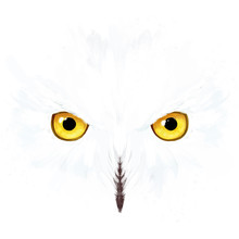 Snowy Owl Eyes And Face