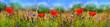 Mohnblumen, Feldblumen, Sommerwiese, Blumenwiese, Banner, Panorama