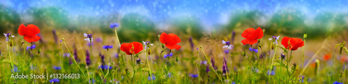 Printed kitchen splashbacks Panorama Photos Mohnblumen, Feldblumen, Sommerwiese, Blumenwiese, Banner, Panorama