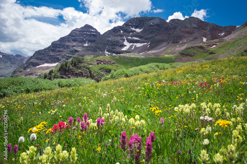 Aspen Wilderness Flowers