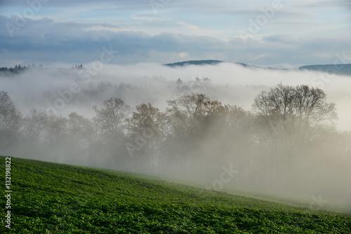 Nebel Bäume © Erik
