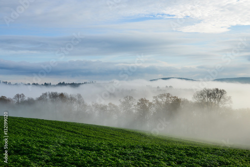 Nebel Wald © Erik