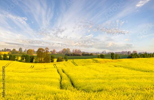 Foto auf Gartenposter Landschappen field of blooming yellow flowers of rape