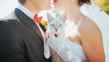 White Cat In The Hands Of The Bride And Groom At A Wedding